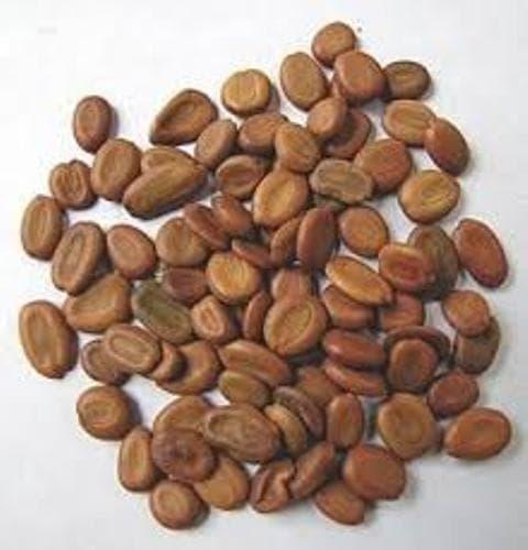 албиция лебек семена