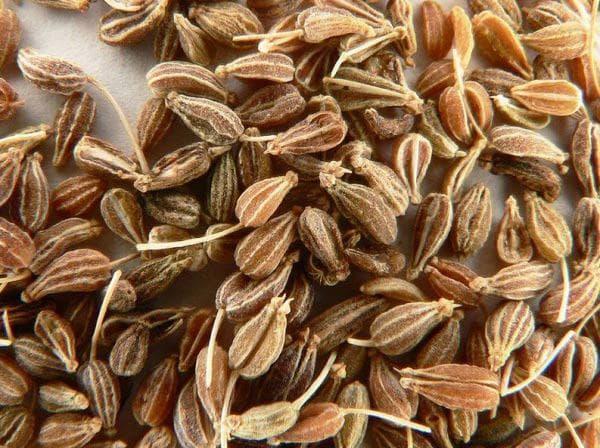 семена на анасон