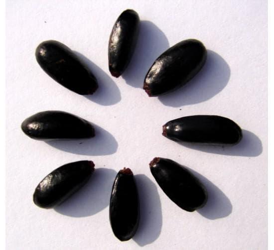 семена на анона