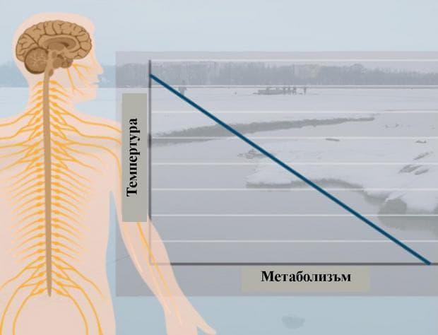 хипотермия и метаболизъм