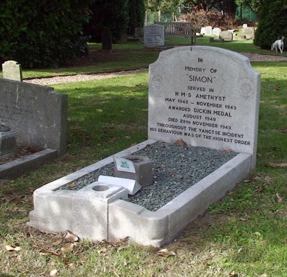 Гробът на почетния котарак
