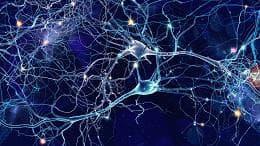 синапси