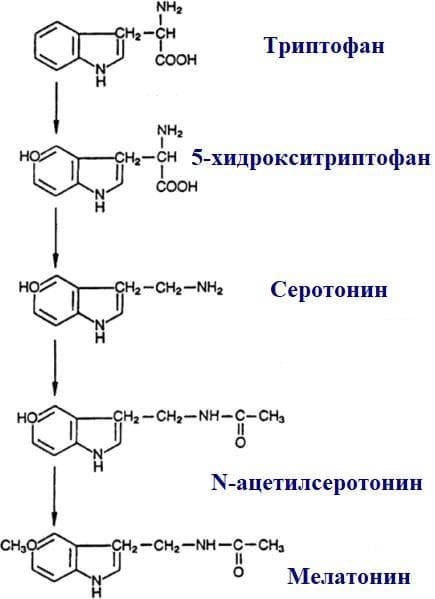 синтез на епифизните хормони