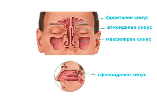 анатомично разположение на сфеноидален синус