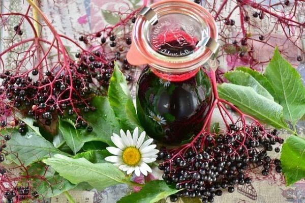 Рецепта на Петър Димков за сироп от черен бъз