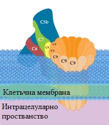 мембран-атакуващ комплекс