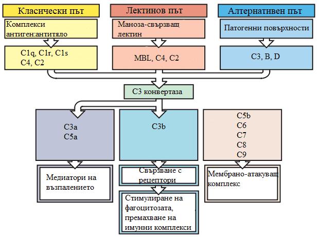 система на комплемента