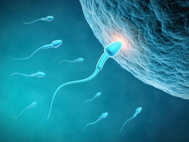 сперматозоиди и яйцеклетка