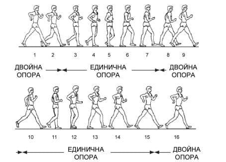 техника спортно ходене