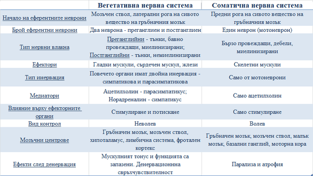сравнение между вегетативната нервна система и соматичната нервна система