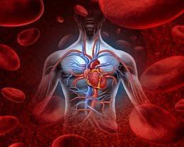 сърдечно-съдова система