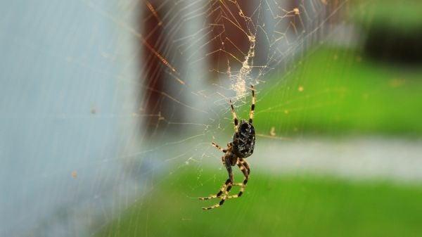 паяк, паяжина