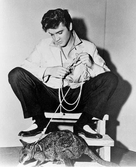 Елвис Пресли и неговото кенгуру