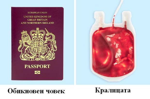 паспорти и банка с кръв