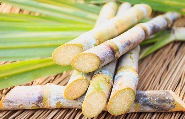 стъбла на захарна тръстика