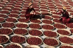 сушене на хинап в Китай
