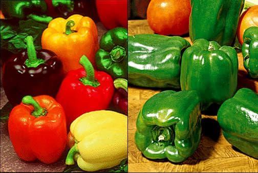 чушки - плод на пипера