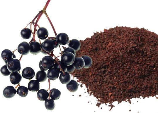 Плодовете на черния бъз са богати на флавоноиди