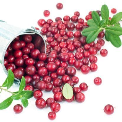 Съдържание на плодовете на червената боровинка