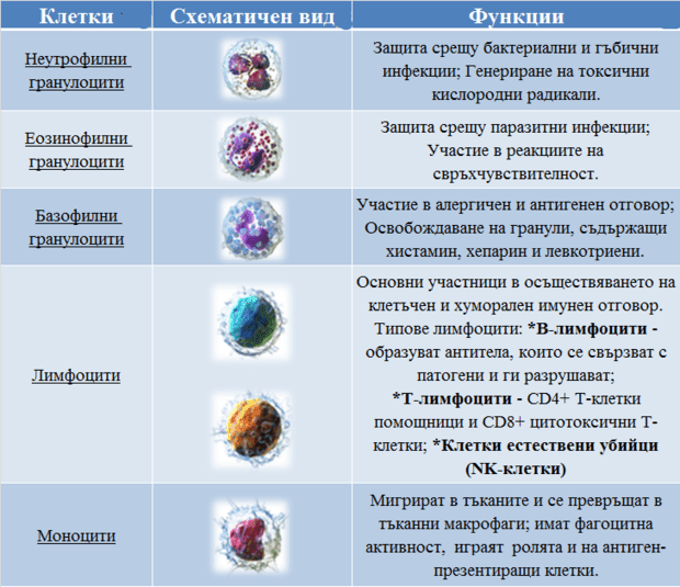 таблица левкоцити