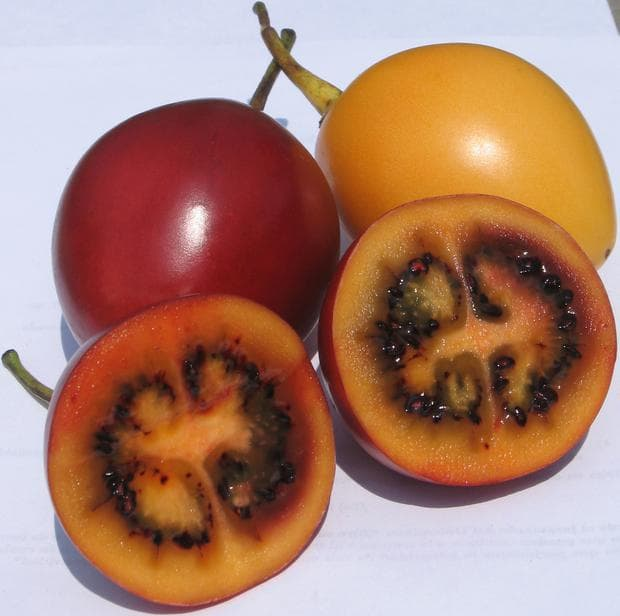 плодове на тамарило