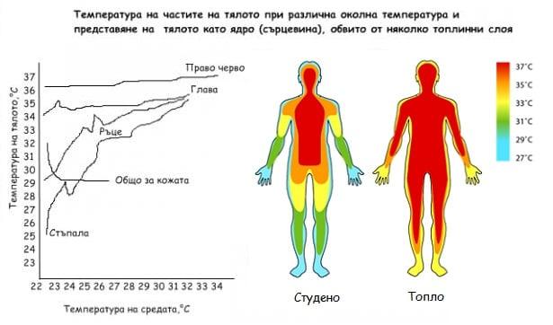 Температура в сърцевина на тялото