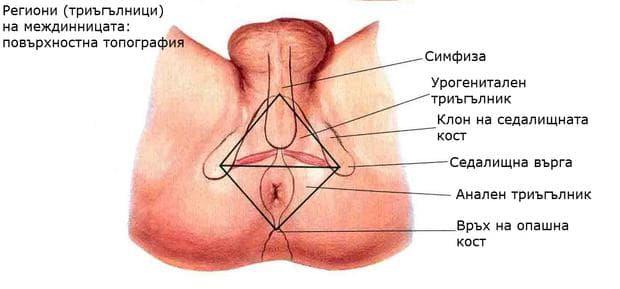 Триъгълници на междинницата