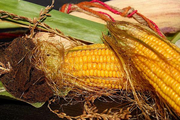 Коса от царевица, свила