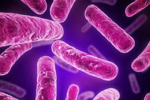Бактерии, причиняващи туберкулоза