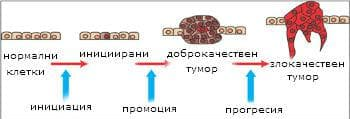 тумори