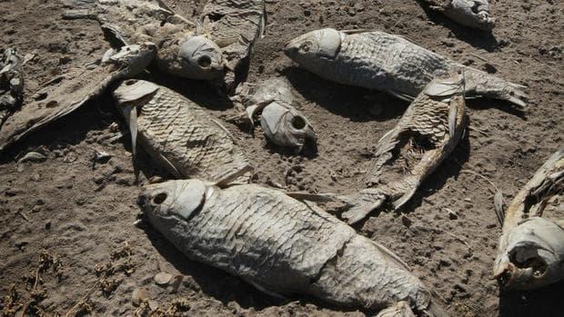 Умрели риби