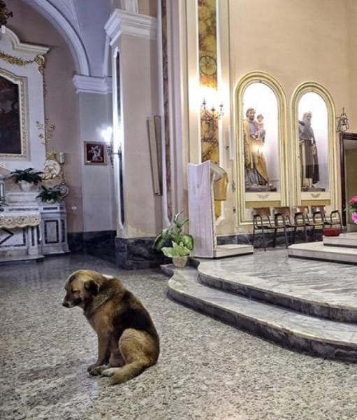 Куче в църква