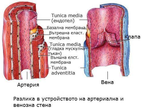 Устройство на артериална и венозна стена