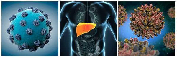 Увреждане на черния дроб от вируса на хепатит В и хепатит С