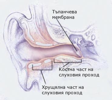 Части на външния слухов проход