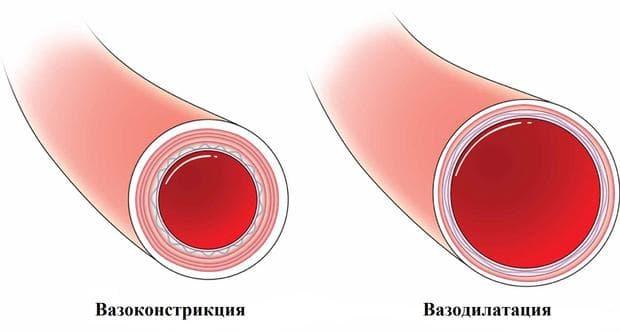 вазодилатация и вазоконстрикция
