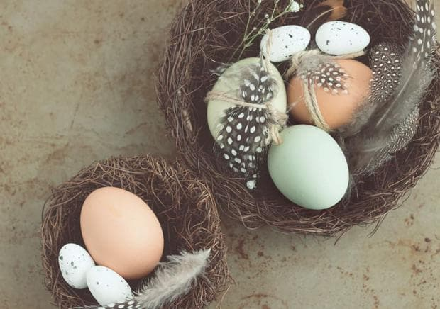 Гнезда с яйца