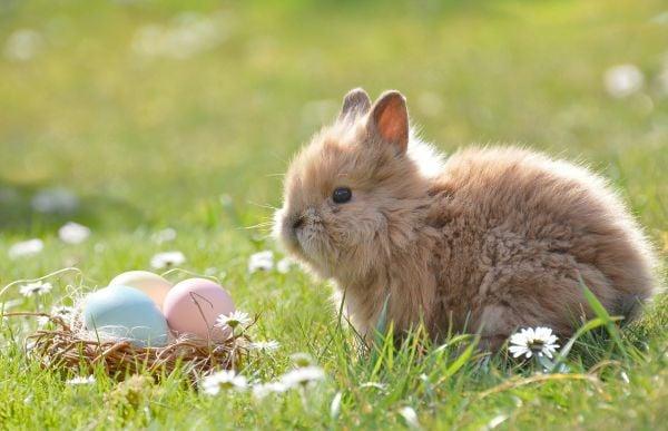 великденско зайче, великденски яйца