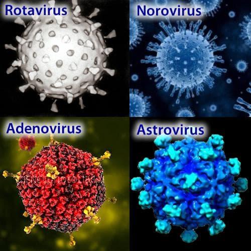 Причинители на вирусни гастроентерити