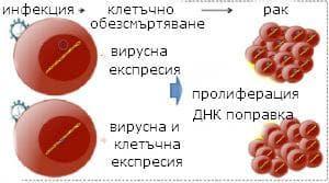 вирусни карциногени
