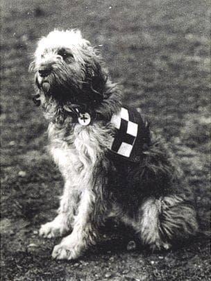 Куче спасител
