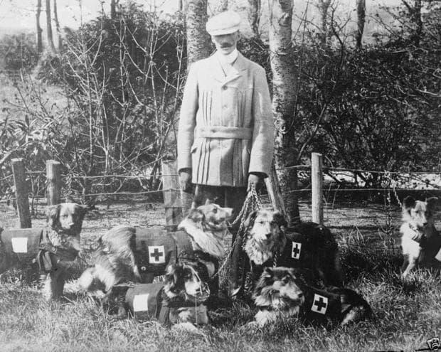 Медицински кучета на Английския Червен кръст