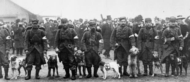 Кучета на френския Червен кръст