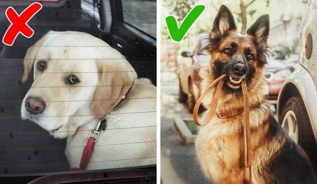 куче в кола