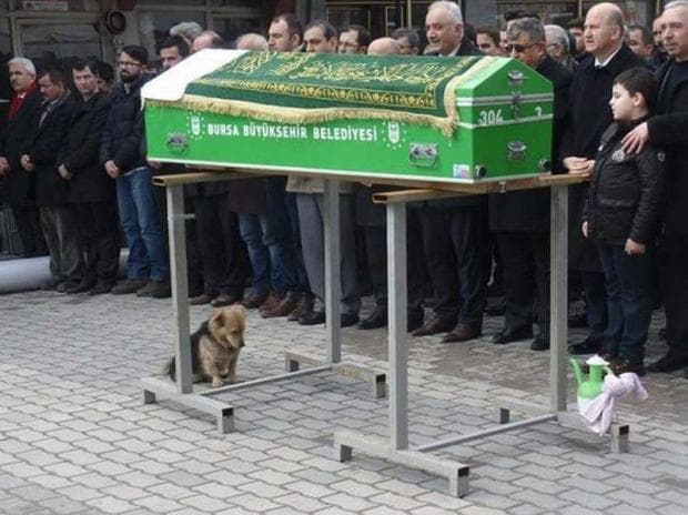 Куче до ковчега на стопанина си