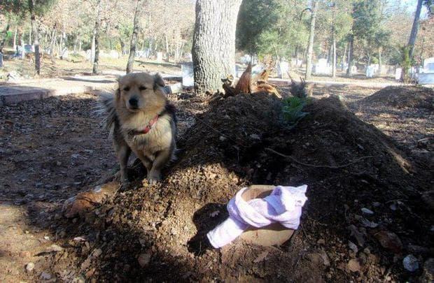 Куче на гроба на стопанина си