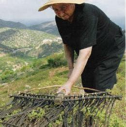 жена събира лабданум
