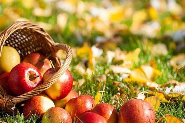 ябърка