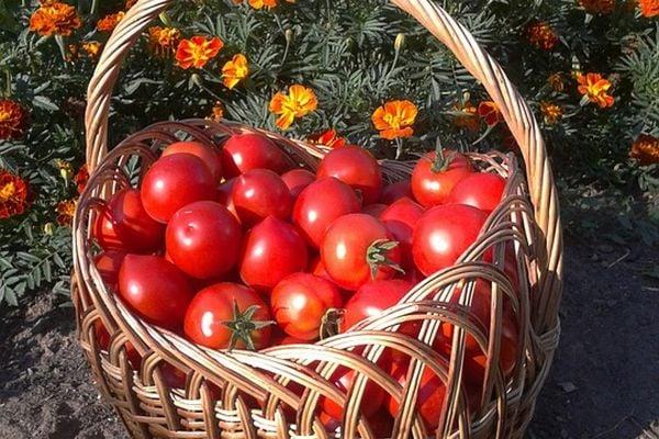 Използвайте сода бикарбонат за подсилване растежа на цветята и доматите.