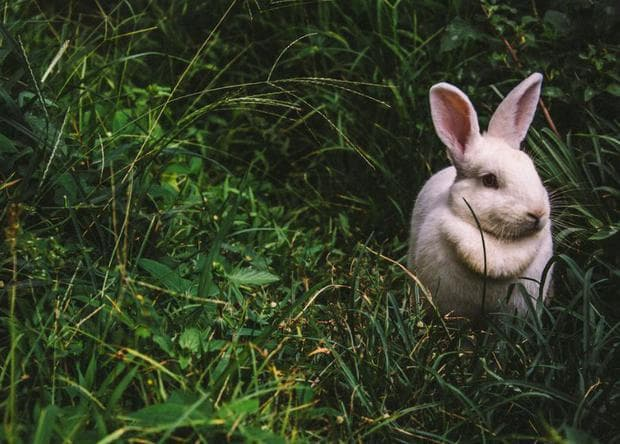 Заек в тревата